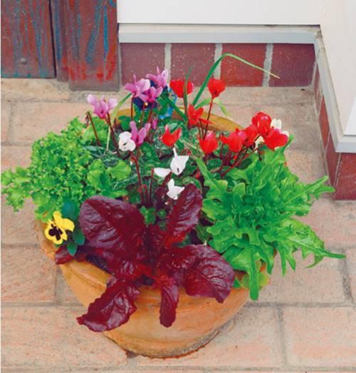 20 Best Houseplants - Easy Indoor Gardening Ideas - Interior Design Ideas